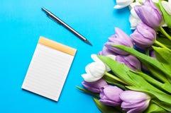 Bukiet biali i purpurowi tulipany kłama na błękitnym koloru tle Fotografia Royalty Free