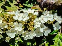 Bukiet biali kwiaty w świetle słonecznym podczas wiosny w parku zdjęcie royalty free