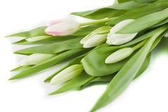 Bukiet biali tulipany Zdjęcie Royalty Free