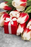 Bukiet biel menchii tulipany na szarym tle Zdjęcie Stock