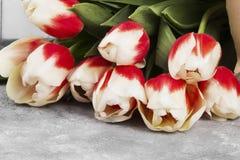 Bukiet biel menchii tulipany na szarym tle Fotografia Stock