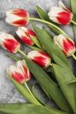 Bukiet biel menchii tulipany na szarym tle Odgórny widok Obraz Royalty Free