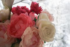 Bukiet bielu i menchii peonie Kwiat lekka tekstura przejazd tła zimy śniegu obrazy royalty free