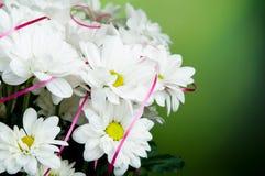 Bukiet chamomile Zdjęcie Royalty Free