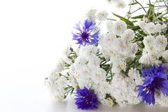 Bukiet cornflowers Zdjęcie Stock
