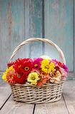 Bukiet cynie kwitnie w łozinowym koszu Zdjęcia Stock