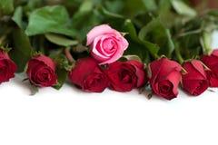 Bukiet czerwieni i menchii róże, odizolowywający Obrazy Stock