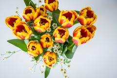 Bukiet czerwoni i żółci tulipany z z małymi dekoracyjnymi stokrotkami na białym tle dodatkowy karcianego formata wakacje Obraz Royalty Free