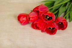 Bukiet czerwoni tulipany obrazy royalty free