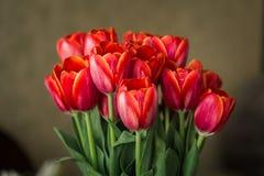 Bukiet czerwoni tulipany w wazie fotografia stock