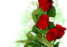 Bukiet Czerwonych róż Wodny kolor royalty ilustracja