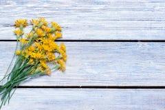 Bukiet dandelions na Obraz Stock