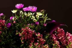 Bukiet dzicy kwiaty na ciemnym tle fotografia stock