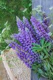 Bukiet dzicy lupines na starej ogrodowej ławce zdjęcia royalty free