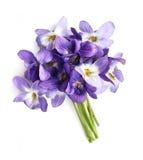 Bukiet fiołków kwiaty obrazy royalty free