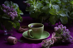 Bukiet fragrant ziele Mennica i macierzanka Styl zmrok Obraz Royalty Free