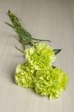 Bukiet goździk kwitnie na jaskrawej drewnianej podłoga Zdjęcia Royalty Free