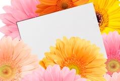 bukiet jaskrawy kolorowy prześcieradło papier i gerberas Zdjęcie Royalty Free