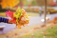 Bukiet jesień czerwoni i pomarańczowi liście klonowi w dziecko ręce Obrazy Stock