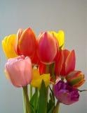 Bukiet kolorowi tulipany Obrazy Stock