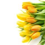 Bukiet kolorowi tulipany odizolowywający na bielu Mieszkanie nieatutowy obrazy royalty free