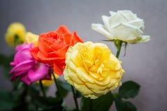 Bukiet kolorowy róży zakończenie Obraz Stock