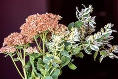 bukiet kwiatów dziczy Obraz Stock