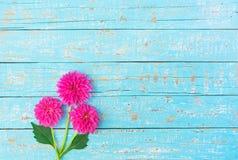 Bukiet kwiaty, świeże różowe dalie Obrazy Stock