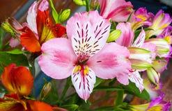 Bukiet kwiaty Alstroemeria Bukiet kwiaty Alstroemeri Obrazy Stock