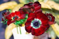 Bukiet kwiaty dla ślubu we wnętrzu kwiatu sklepu lub obrazy stock