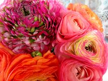 Bukiet kwiaty jaskiery Obraz Royalty Free