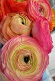 Bukiet kwiaty jaskiery Obrazy Royalty Free