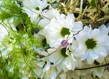 Bukiet kwiaty bukiet kwiatu gerbera Obraz Stock