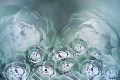 Bukiet kwiaty turkusowe białe peonie na rozmytym halftone tle Rocznika kwiatu skład 2007 pozdrowienia karty szczęśliwych nowego r Zdjęcie Royalty Free