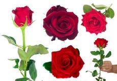 Bukiet kwitnąć zmrok - czerwone róże w wazie zdjęcie stock
