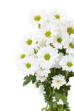 bukiet kwitnie biel Obraz Stock