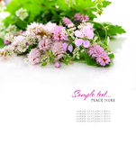 bukiet kwitnie dzikiego Zdjęcie Royalty Free