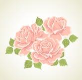 bukiet kwitnie ilustracyjne róże Zdjęcia Royalty Free