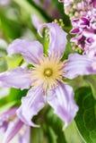 Bukiet lily clematis kwitnie w szklanej wazie praca kwiaciarnia przy kwiatu sklepem z bliska Zdjęcie Stock