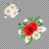 Bukiet maczki i chamomile kwiaty Zdjęcia Royalty Free