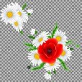Bukiet maczki i chamomile kwiaty Obrazy Stock