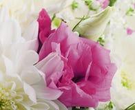 Bukiet od biel i menchii kwiatów zdjęcia royalty free
