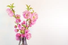 Bukiet odizolowywający na bielu w wazie migdałowy okwitnięcie Zdjęcia Stock
