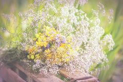 Bukiet ogródów kwiaty i leczniczy ziele Zdjęcia Royalty Free