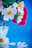 Bukiet piękne dzikie róże Fotografia Royalty Free