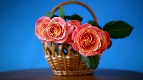 Bukiet piękne różowe róże odizolowywać na błękicie zdjęcie wideo