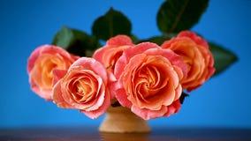 Bukiet piękne różowe róże odizolowywać na błękicie zbiory wideo