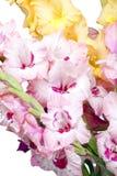 Bukiet piękni kolorowi gladioli Zdjęcie Stock