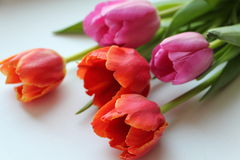 Bukiet piękni stubarwni tulipany dla wakacje Fotografia Royalty Free
