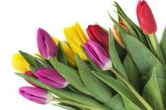 Bukiet piękni wielo- barwioni tulipanów kwiaty Fotografia Royalty Free